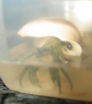 Se murió el cangrejito :-(