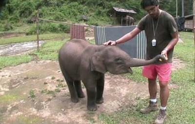 El Elefantito de 7 meses - 400 kilos. (El que está a la izquierda) jejeje