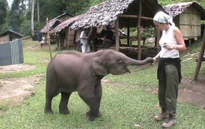 Otra foto del simpático elefantito.