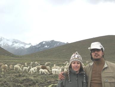 Rebaños en el Altiplano peruano